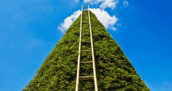 לטפס על סולם ההצלחה